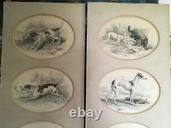 Pair English Lithograph set of Prints Dogs from Devon England Estate